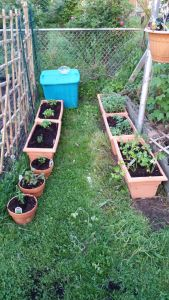Herbs and compost
